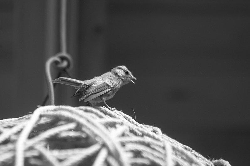 Vogel auf einer Kugel, Vogelperspektive